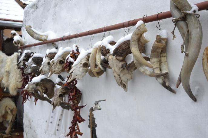 Skulls, Mohács, Hungary