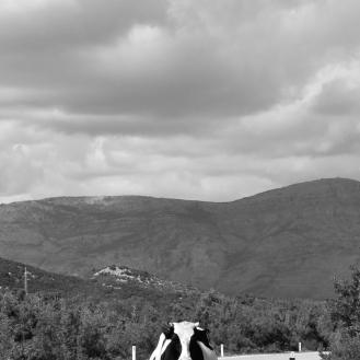 Staring contest, Bosnia